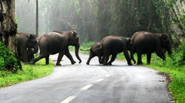 Go for a road trip from Bangalore to Wayanad via Bandipur for this amazing view