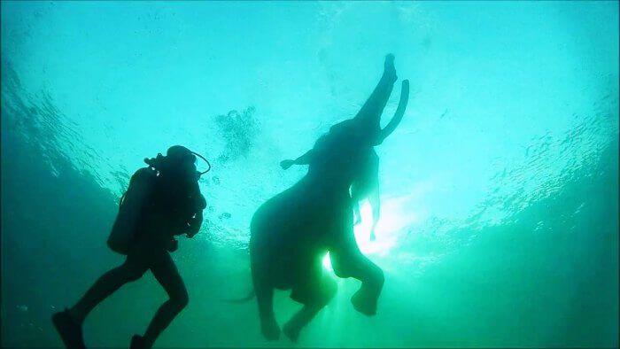 Diving with the ocean swimming elephant Rajan is one of the best things to do in Andaman