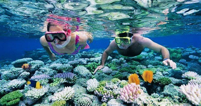 Image result for andaman islands snorkeling