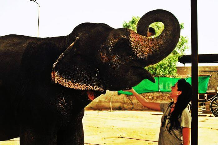 A friendly elephant at Elefantastic in Jaipur