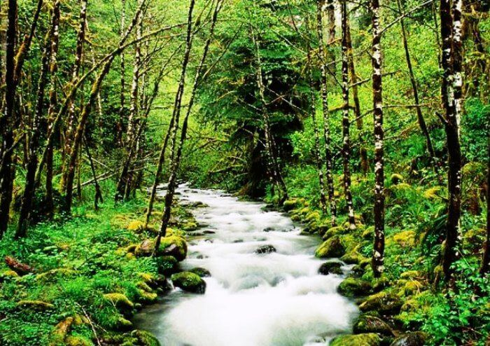 Explore Sinharaja Forest Reserve with your love