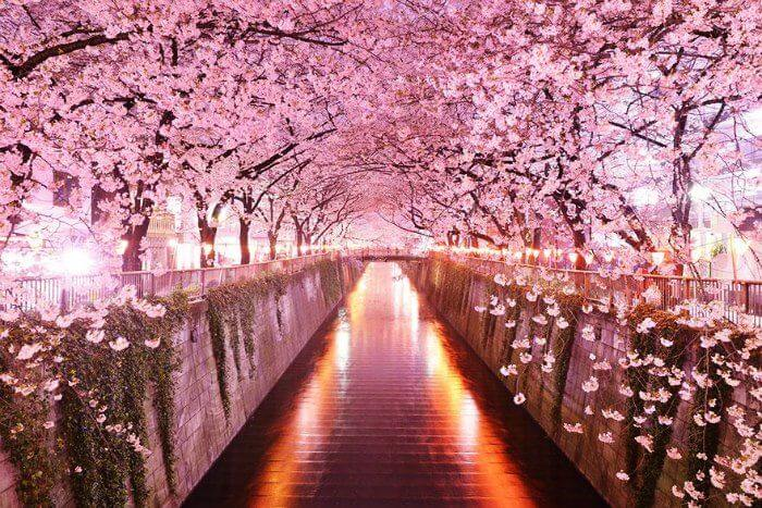 A Romantic Walkway In Kyoto Japan