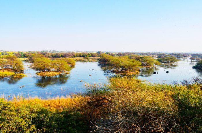 Wetland of Sultanpur Bird Sanctuary in Haryana