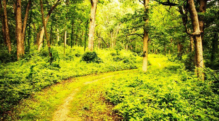 The jungle trails of Lansdowne in Uttarakhand