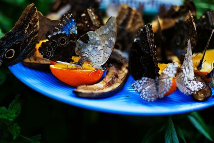 Butterfly conservatory in Ponda, Goa