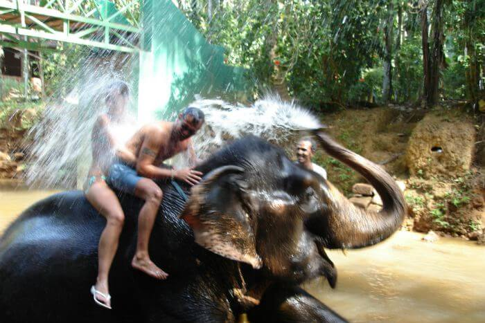 Elephant splash in goa