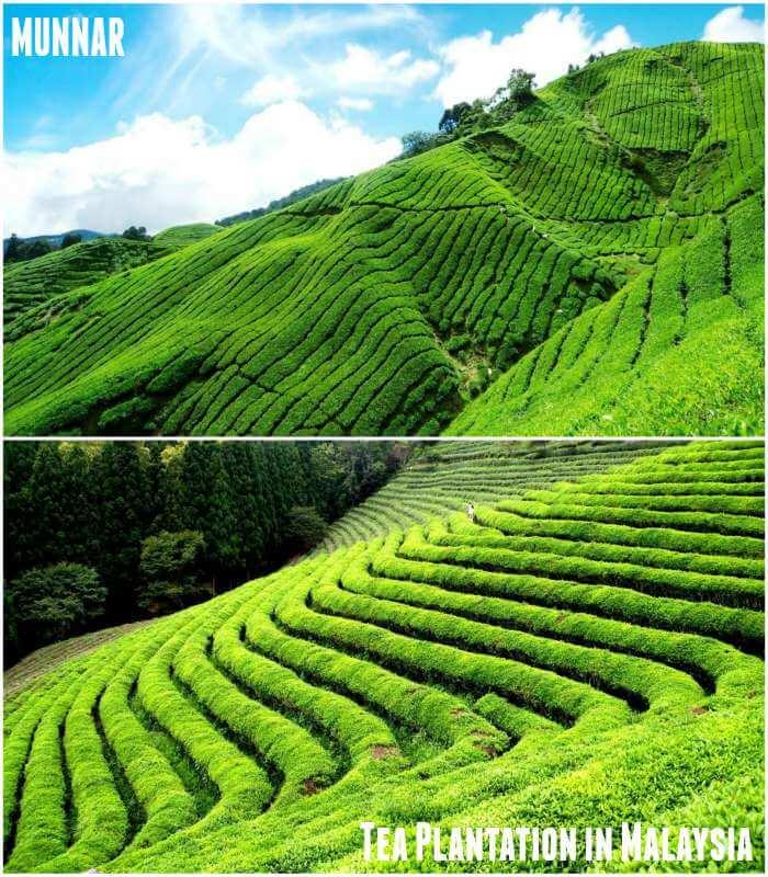 Munnar in Kerala-Boh Tea Plantation in Malaysia