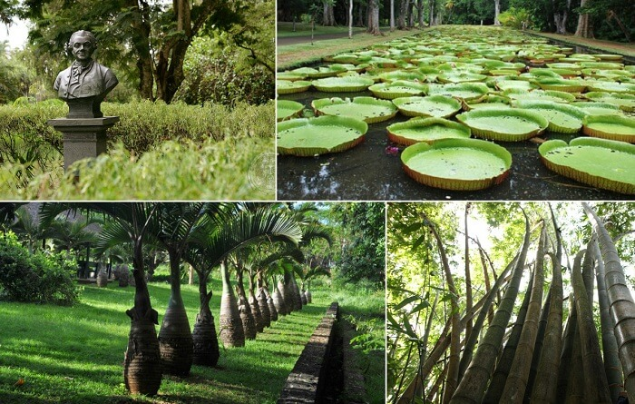 A collage of the various things to see at the Sir Seewoosagur Ramgoolam Botanical Garden