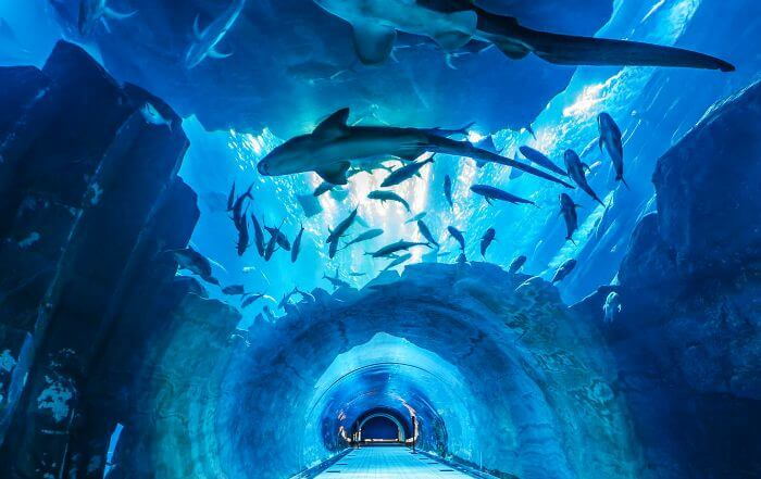 The alleys of underground Dubai Aquarium