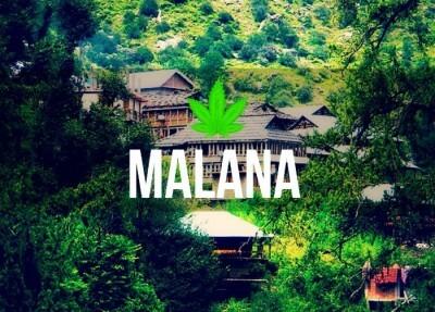 malana-cover