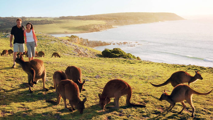 Kangaroo Island is one of the most indulgent places to visit in Australia for honeymoon