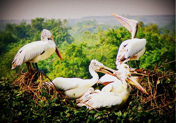Birds inhabiting Nelapattu Bird Sanctuary