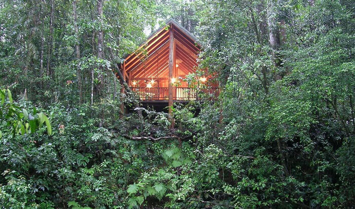 The Canopy treehouses in the dense rainforest