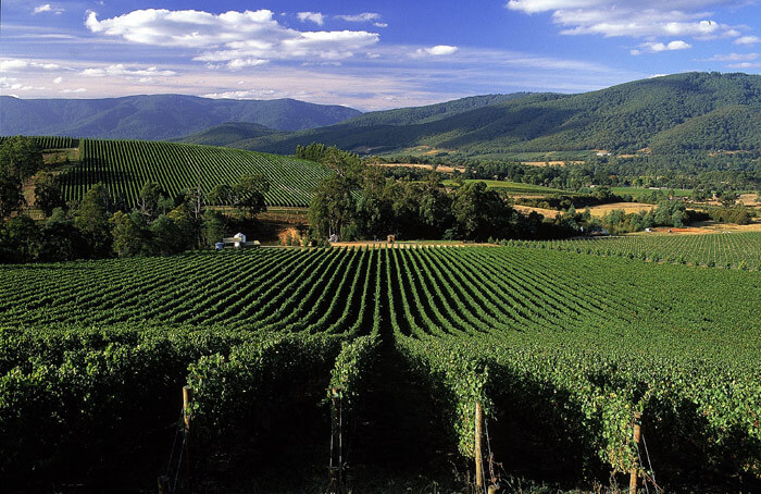 Yarra Valley in Victoria is most pleasantly weathered among the Australia honeymoon destinations