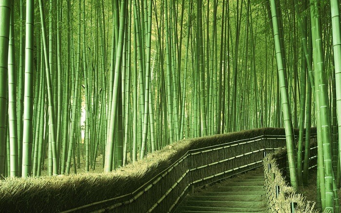 A staircase through the bamboo forest in Japan