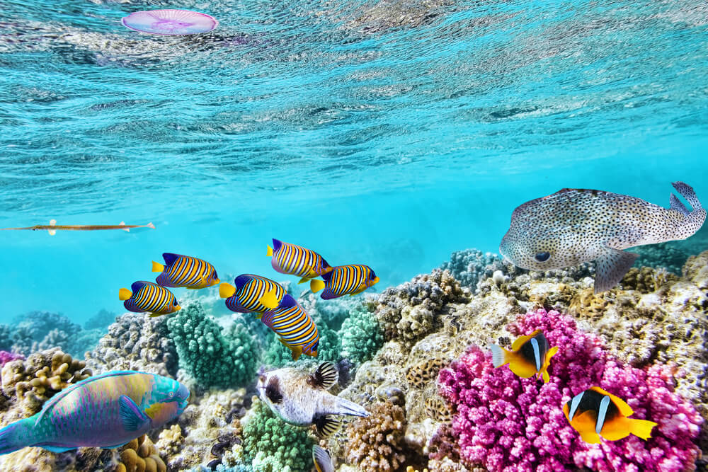 Wonderful and beautiful underwater world with corals and tropical fish at the Great Barrier Reef of Australia