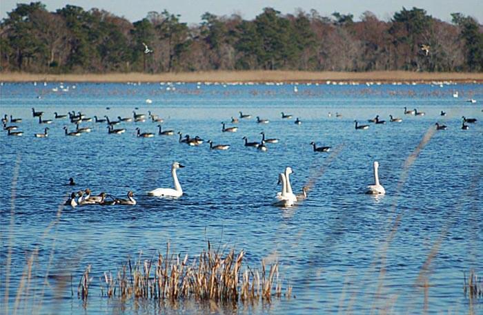 Different birds at Chilika Lake in Orissa