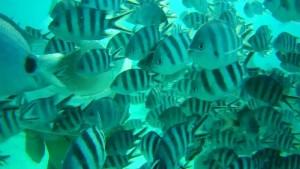 Beautiful view of life underwater in Mauritius