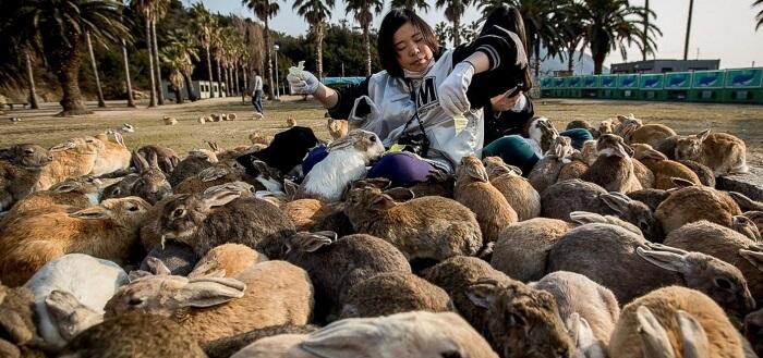 Rabbit Island in Japan - Copy