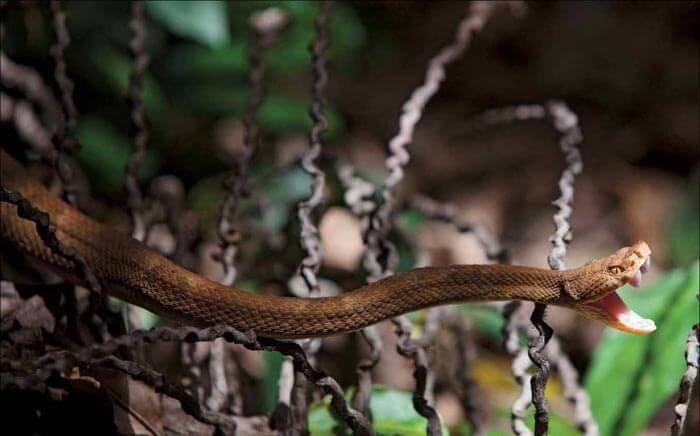 Snake Island, São Paulo