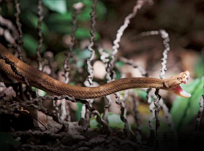 Snake-island-in-Brazil