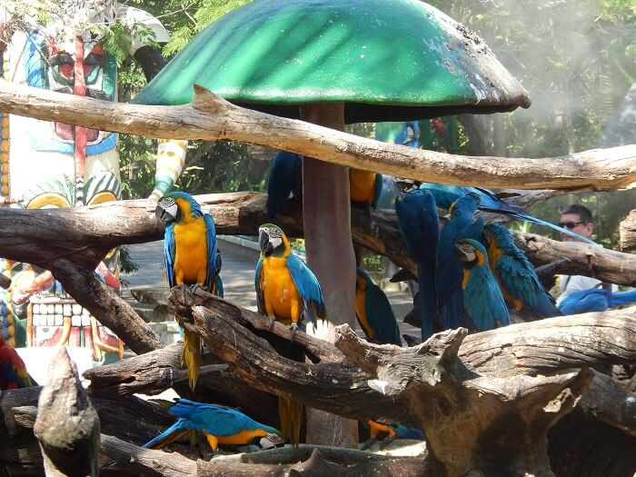 Birds in Safari Park Bangkok