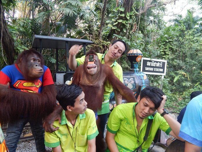 Chimpanzee show in Safari World Thailand