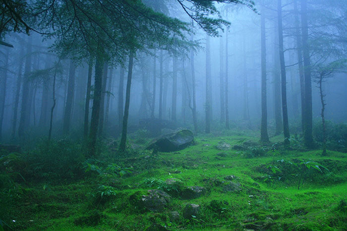 A view of the lush, dense forests in Lambasingi enveloped in thick fog