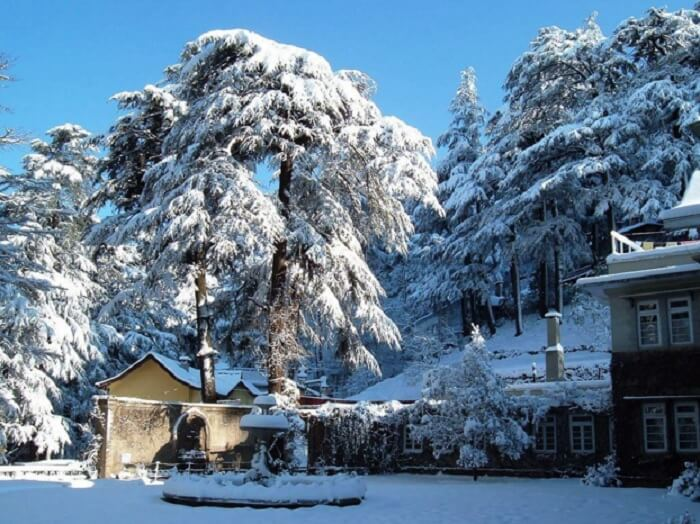 Snowcovered trees and houses in Gulmarg