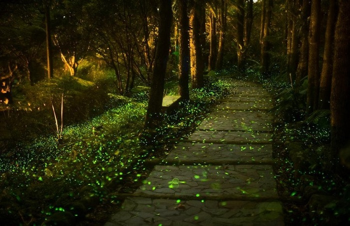 The beautiful fireflies in Pushkarwadi
