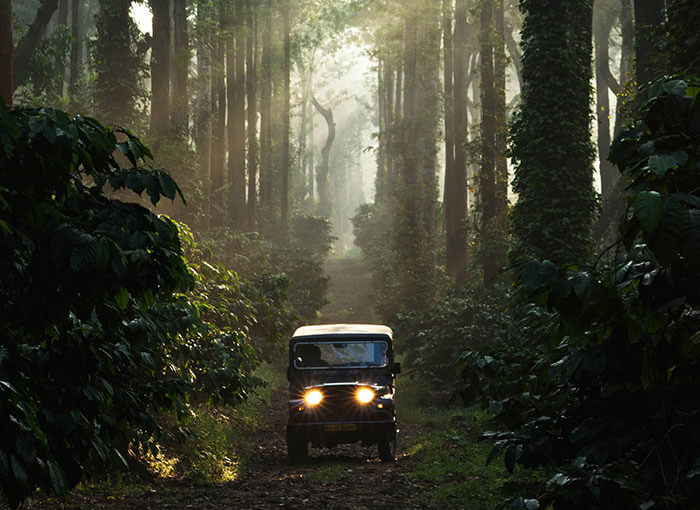 A road trip from Bangalore to Coorg leading through the jungle