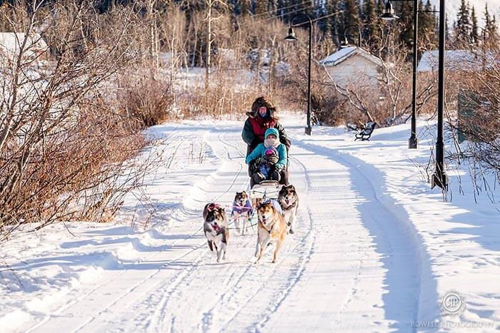 A family ride on a sleigh pulled by dogs while the sun shines in the evening