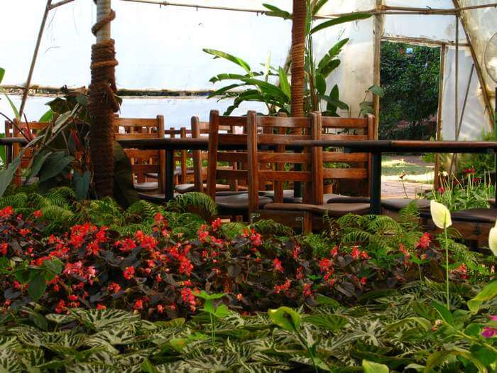 Strawberry plantation under gazebo at Mapro Gardens which is one of the best places  to visit in Mahabaleshwar