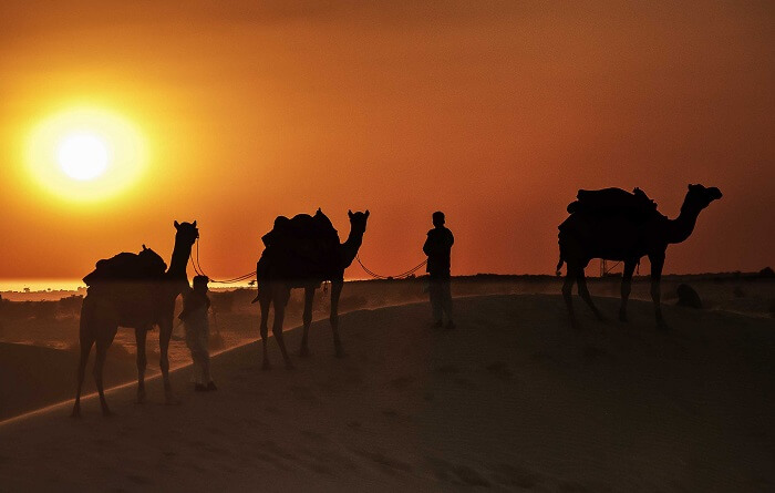 Camel rides from tents and camps take you to sand dunes for the sunset view in Jaisalmer