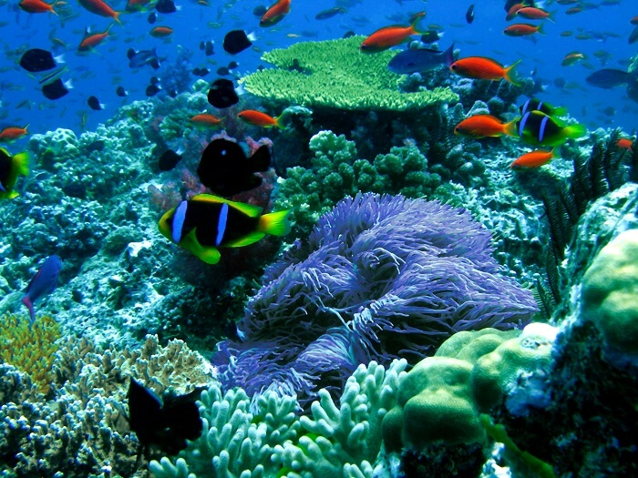 A beautiful view of the coral reef at the Namena Marine Reserve