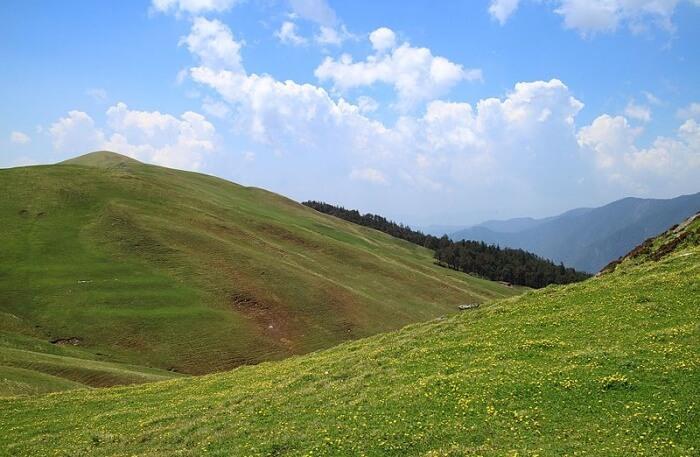 Green Natural beauty