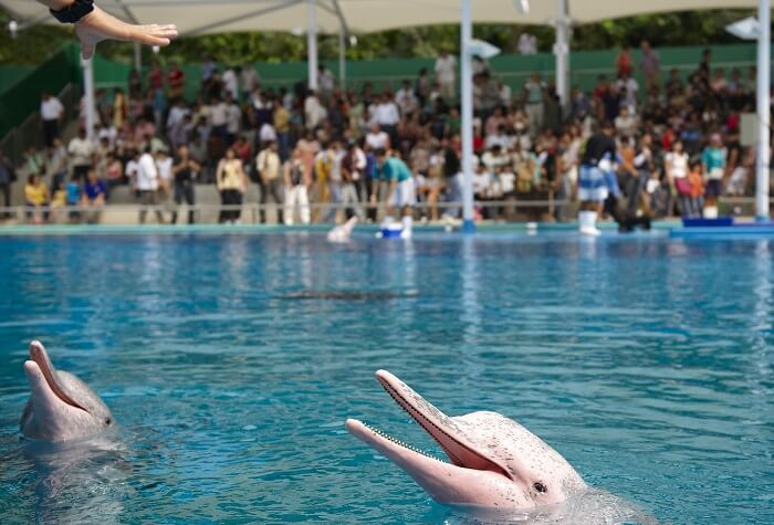 Two happy dolphins at Dolphin Lagoon in Sentosa Underwater World