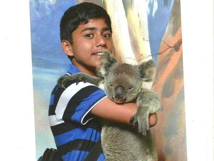 Kuala Bear in Currumbin Wildlife Sanctuary Australia