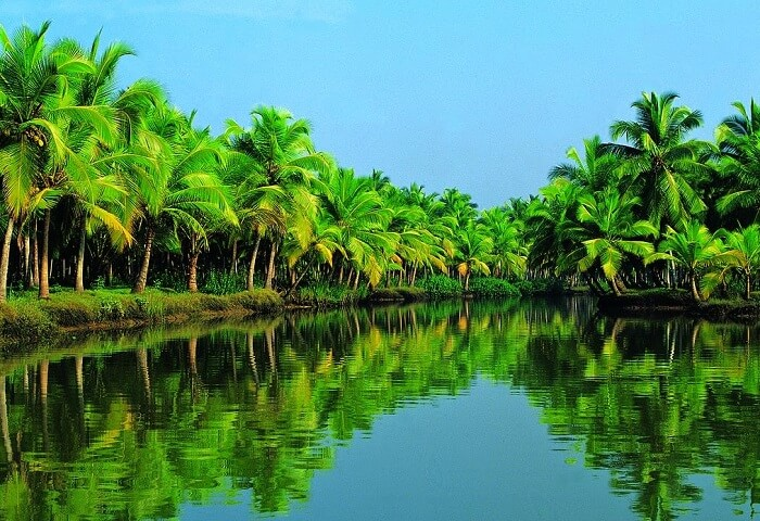 The coconut mangroves that line the Karamana River makes it a stunning place to visit in Kovalam
