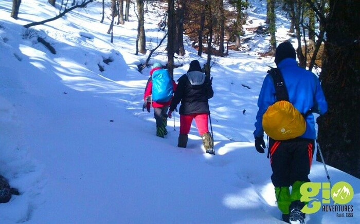 Trekkers walk on the snow covered trails on their Dodital Himalayan Winter trek