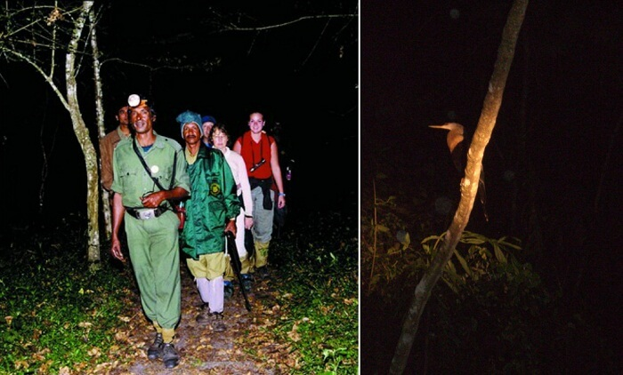 Patrollers on the night patrol inside the Periyar Tiger Reserve