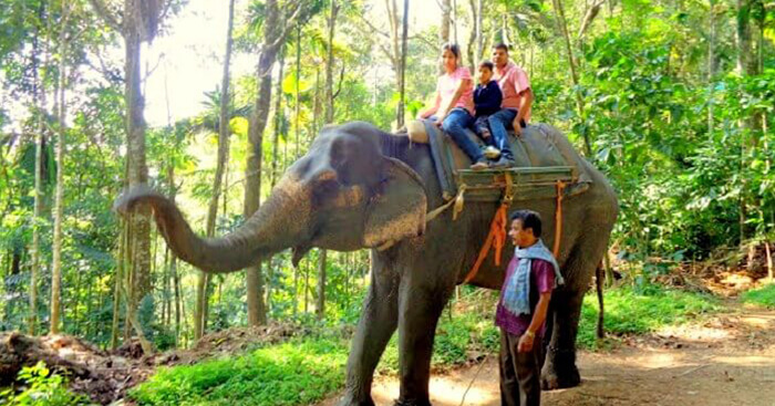 Pradeep takes an elephant safari with his family on a trip to Kerala