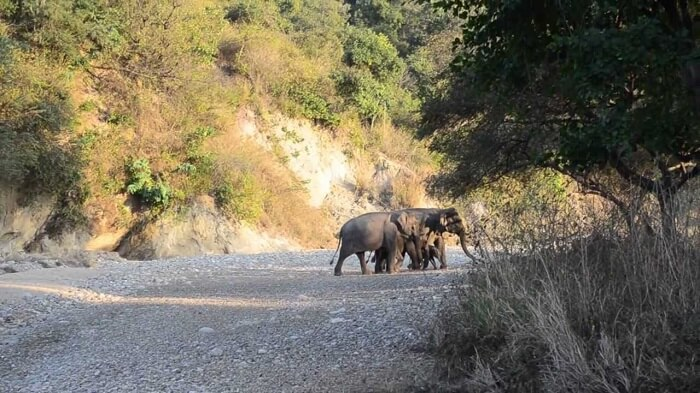 A family of elephants at the popular Rajaji National Park