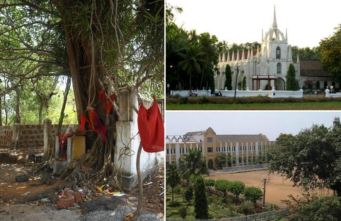 A view of the haunted banyan tree and the nearby churches in Saligao village