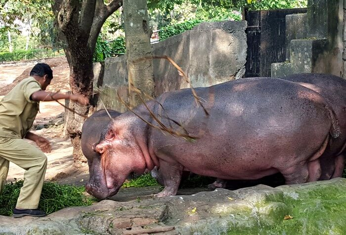 Rhinos at Trivandrum Zoo