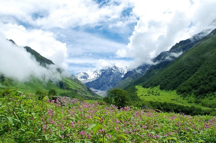 Flowers looking beautiful on a misty morning at the valley of flowers