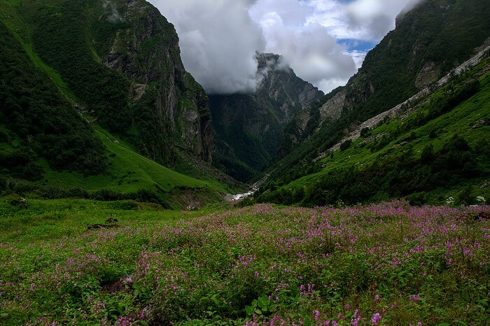 A shot of a cloudy day at the Valley of Flowers