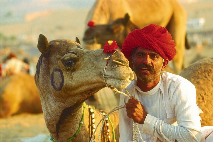 A man with his camel during the Camel Fair in Pushkar