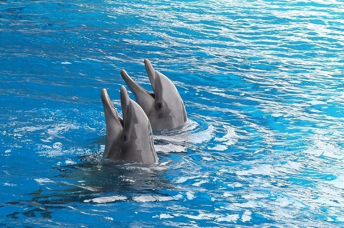 Dolphin Watching in Havelock Islands Andaman