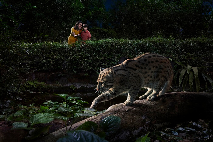A fishing cat trying to attack an unsuspecting fish in Fishing Cat Trail while the tourists observe